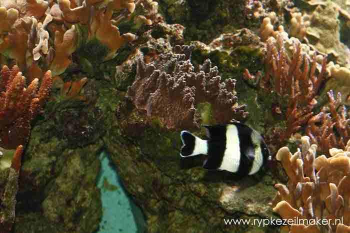 IPCC/Leemans citeert Greenpeace-literatuur bij koraal: de koraalbioloog bijt vandaag terug op zijn blog climateshifts