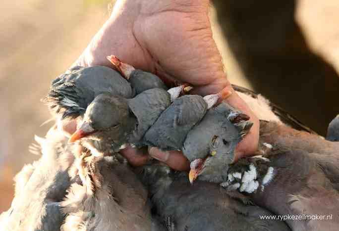 directe menselijke invloed heeft meer invloed op de overleving van diersoorten dan klimaat