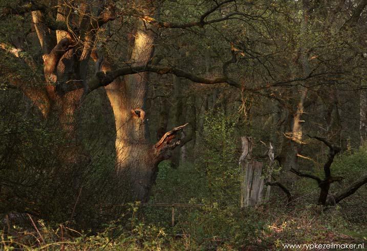 bij oude en dode bomen komt netto meer CO2 vrij: maar oud woud is wel veel mooier en veel biodiverser dan Al Gore's compensatiebos. CO2 alleen is ook niet alles