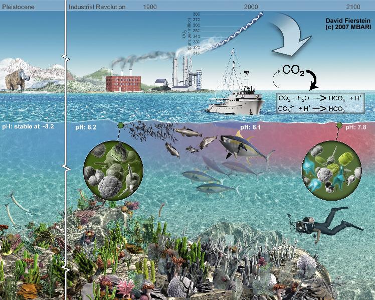 Artistieke weergave van de verzuring van oceanen