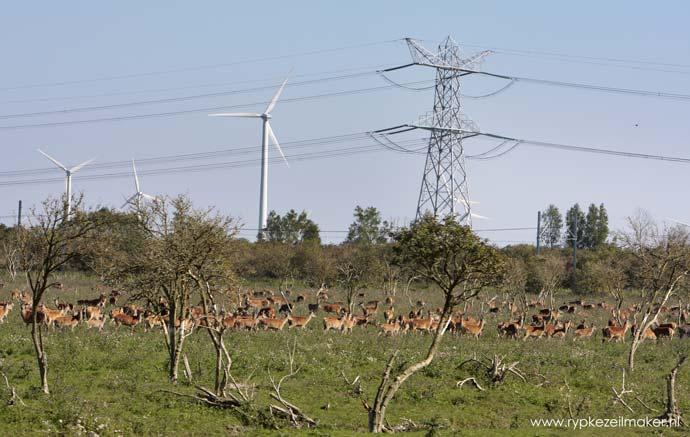 Serengeti Hollandaise: argumentatie bij natuur- en milieubehoud zit vol innerlijke tegenstrijdigheden die wetenschappelijk niet zijn onderbouwd