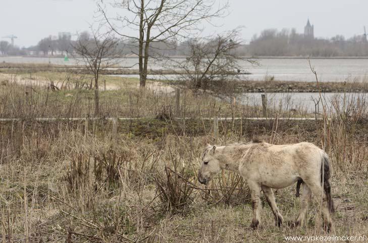 'Nieuwe natuur'bij Zaltbommel: hier bij Slot Loevestein wil het WWF een klimaatindoctrinatiecentrum neerzetten om brave donateurs te kweken onder kinderen. Dat heeft niets met natuuraanleg en beheer te maken