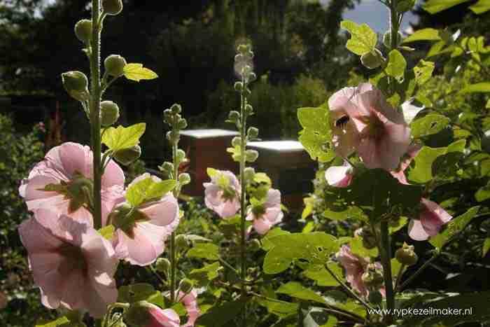 Meer bloemen, meer bijen en de wereld is weer een stukje mooier.  Was getekend, uw Hippie van Climategate