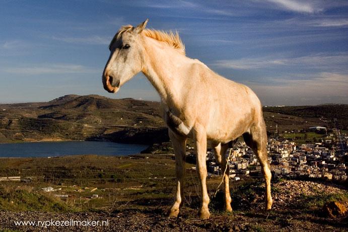 is de fosfaat op, dan moeten we weer met paard en poepton het land op. Maar we kunnen nog even vooruit