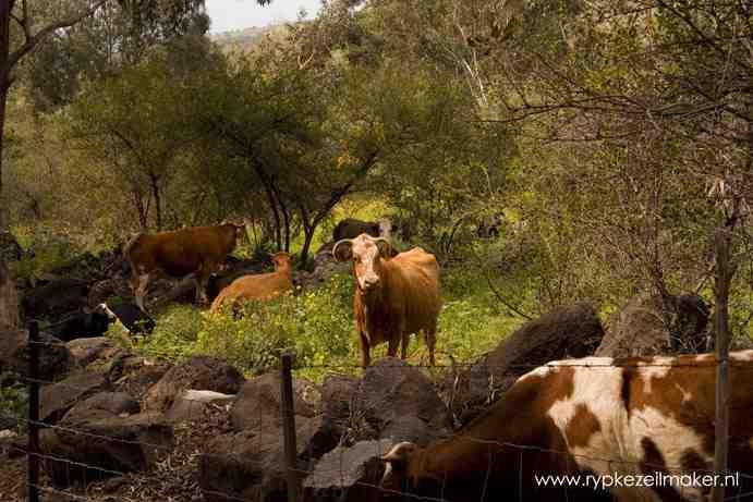 Koeien aan de Jordaan: water is in warme gebieden de sleutel en erosie, niet het bevriezen van de temperatuur op een niveau van voor de zondeval