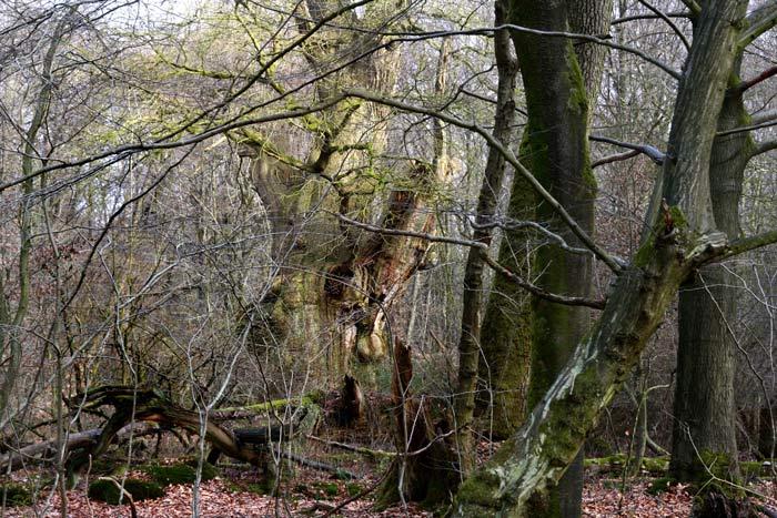 Een laatste snippertje eeuwenoud Hudewald in Duitsland: zoals de ontbossing in het Westen verliep, zo zal deze ook verlopen in Tropische regio