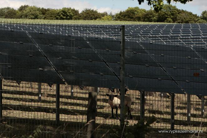 schapen houden vegetatie kort onder zonnecellen