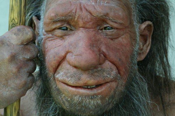 Neanderthaler: vriendelijke pure vleeseter