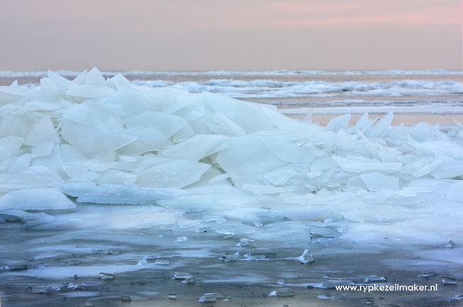 Strenge winters op het Wad met kruiend ijs vernietigen de meeste mosselbanken. Hebben mosselen dus strenge winters 'nodig'?