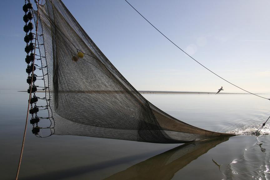 De enige straks toegestane visserijmethode op de Noordzee; achter het net vissen