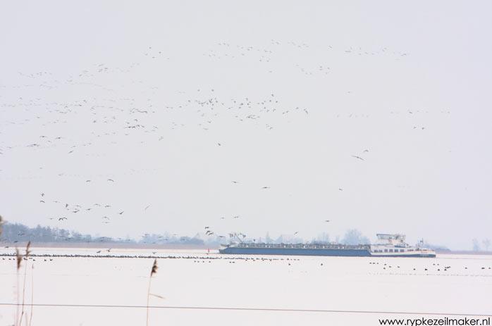 Eindelijk winter: de ganzen bij het Prinses Margriet Kanaal verzamelen zich met duizenden bij het laatste wak.