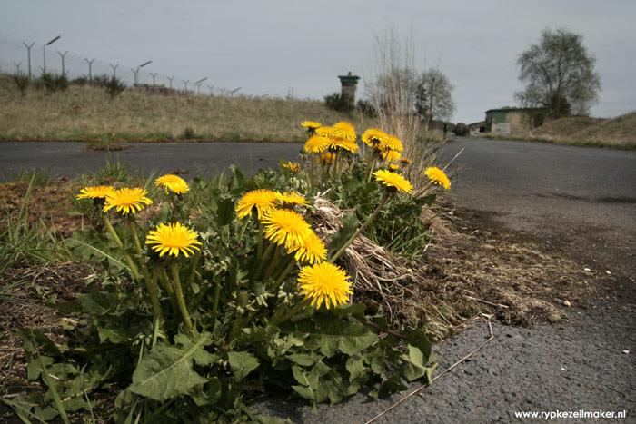 Onkruid/biodiversiteit verovert verlaten militaire basis