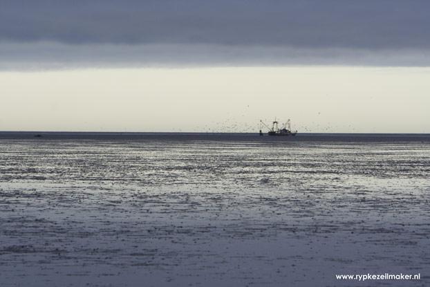 Een in Denemarken en Duitsland bejaagde eend zou hier volgens Imares en milieubeweging bang van worden