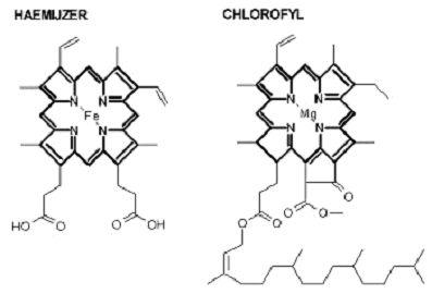 chloroheam