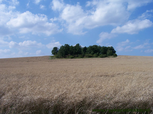Meer opbrengst per oppervlak, het dichten van de yield gap spaart ook natuurgrond