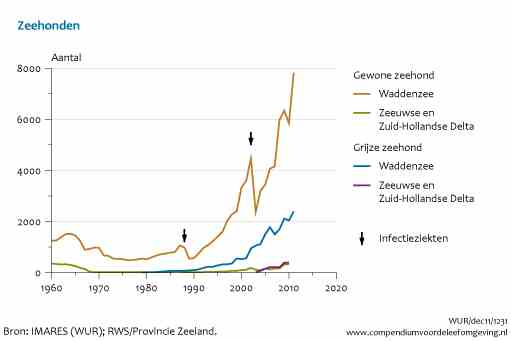 Exponentiele groei zeehondenpopulatie moet sterk top down effect hebben op ecosysteem Kustzone