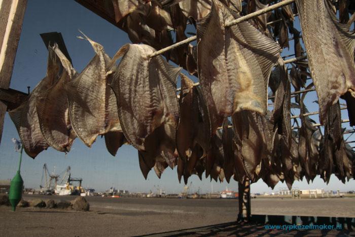 Schar- bijvangst in tongvisserij- te drogen in Lauwersoog. Dat overleven ze ook niet
