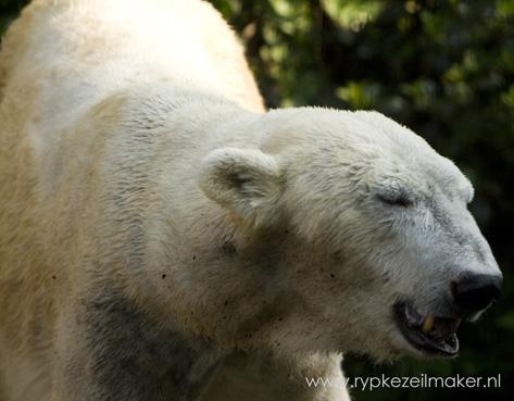 Earth Hour 'redt' 0,0000000000000000000000000000000000000000001 ijsberen, misschien..