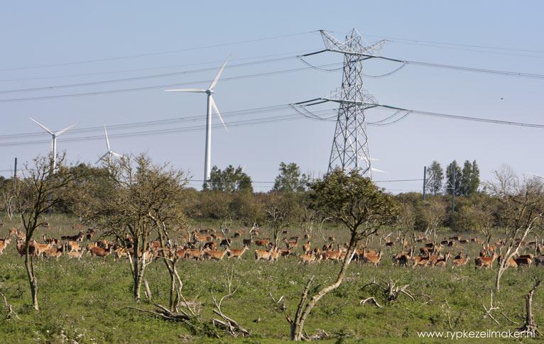Serengeti Hollandaise: Nederlandse compromiswildernis, goed voor een kwart eeuw durende ecologische soapserie genaamd 'Oostvaardersplassen'