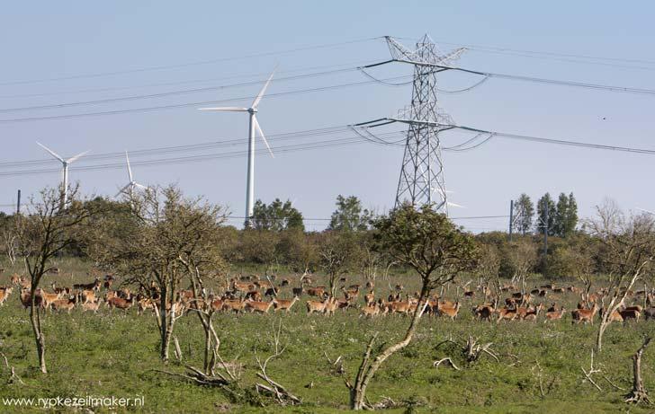 Serengeti Hollandaise, wildwest voor Staatsbosbeheer