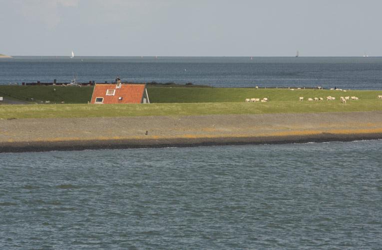 De meest effectieve natuurbescherming in NL: aanleg en onderhoud dijken