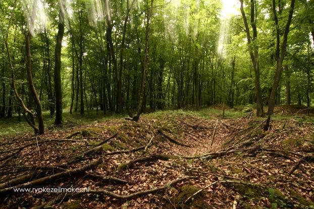 Bomkrater bij Verdun uit 1916, nu bebost