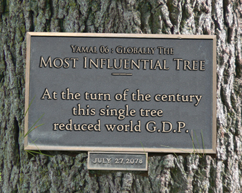 most-influential-tree-3501