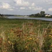 Stikstofminnende vegetatie met boerenwormkruid in Wageningse uiterwaarden: niks mis mee