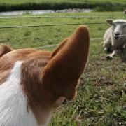 Exoten, huisdieren, hier met een onderlinge miscommunicatie