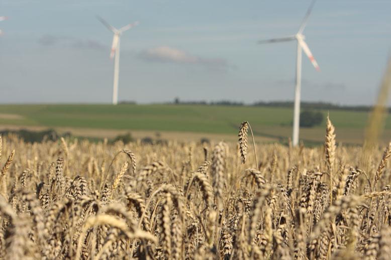 Mondiaal in halve eeuw 4 procent extra tarweopbrengst door CO2-fertilisatie