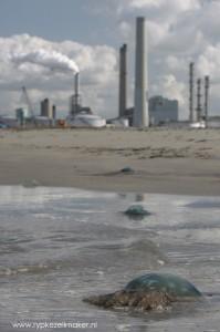 Kolencentrale op Maasvlakte. Goedkope kolen en schalierevolutie verdringen offshore wind