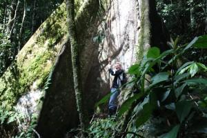 regenwoud plankwortel