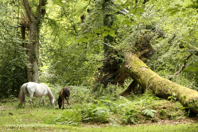De grote wildernis van de laatste wilde paarden bestond uit dicht bos