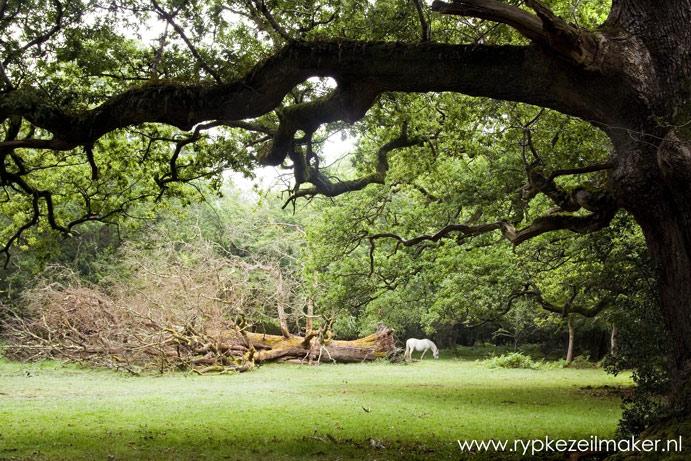 De laatste wilde paarden waren bospaarden