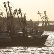 Bodemvisserij heeft ook gunstige ecosysteemeffecten...