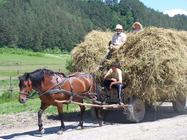 (arbeids)intensieve landbouw in EU-lidstaat Roemenie