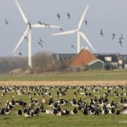 Alle molens staan al op windrijke locaties, en ook daar staan ze vaak stil