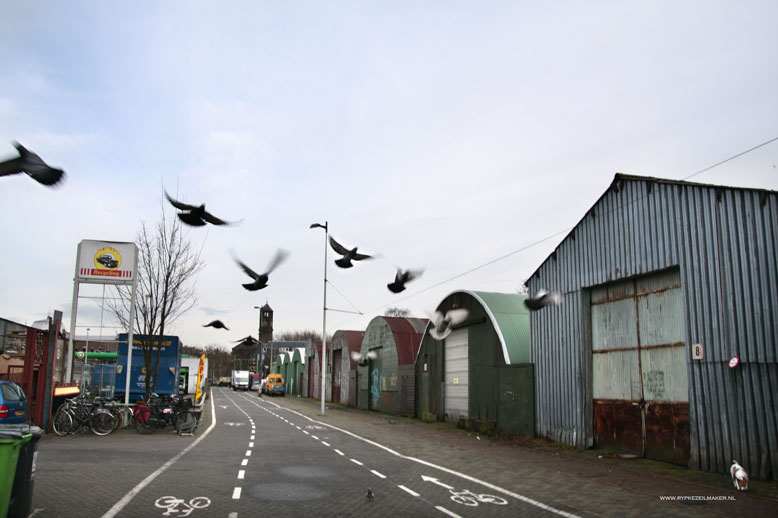 Stadsduiven, vogelbiomassa voor stadspredatoren die afval in vlees omzetten