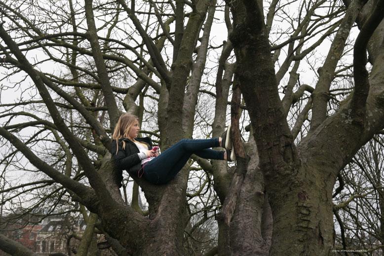 Een duifje nestelt zich in een boom