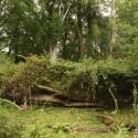 New Forest: wat een rommel, onveilig