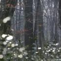 De beuk domineert steeds meer onze bossen dankzij de klimaatverandering sinds 3000 jaar geleden