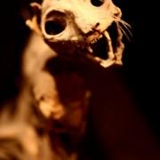 Gemummificeerde kat, Natuurmuseum Maastricht. Foto RZ