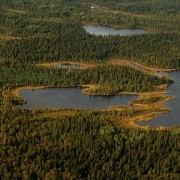 Boreaal bos Kvarken Archipel, gevormd nadat de ijskappen verdwenen.