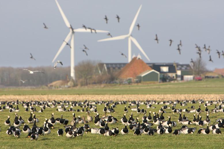 Met molens zelf is niets mis, het gaat om de irrationaliteit achter massale windfarms