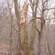 Het Speulderbos vanochtend: een afspiegeling van onze 'oorspronkelijke' biodiversiteit die vooral uit bos bestond