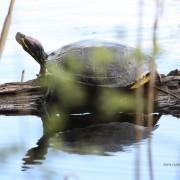 Deze schildpad kwam ik in het bos tegen tijdens joggen