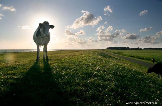 Reade Klif, favoriet stukje Friesland. Binnenkort met een haag windmolens
