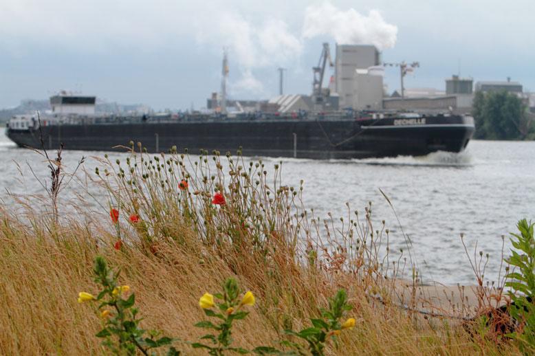 Bijzondere stadshabitats, ruigte bij havens het IJ en de Gestuurde storm onder hoogspanning bij het IJmeer