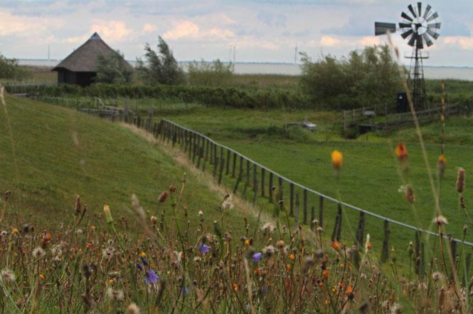 Mokbank, op 30 km afstand domineren de turbines in aanbouw bij Urk