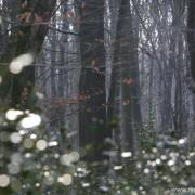 Beukenwoud Urwald Hasbruch